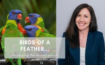 Introducing the Newest Parrot | Online Marketing Coordinator